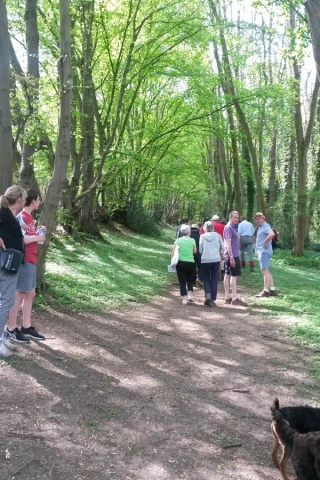 Woodland, Chesham Bois Beating the Bounds Walk May 2016