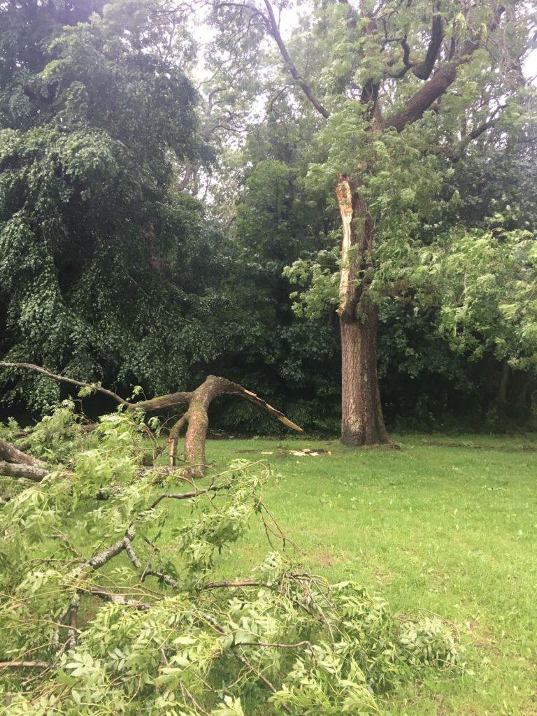 Ash tree damage Chesham Bois
