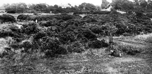 Chesham Bois Common scrubland