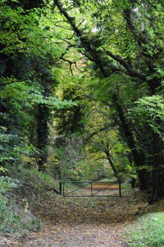 Great Bois Wood Chesham Bois