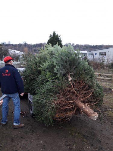 Transporting Chesham Bois PC Christmas Tree