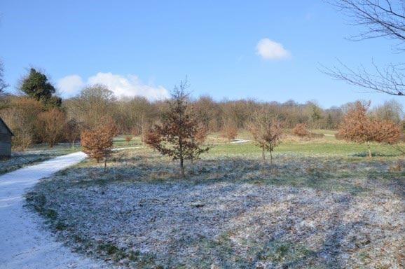 Chesham Bois Burial Ground - frosty morning