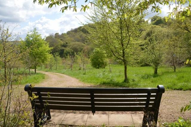 Bench in Chesham Bois Burial Ground