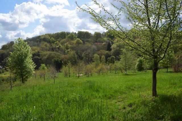 Chesham Bois Burial Ground - woodland burial ground