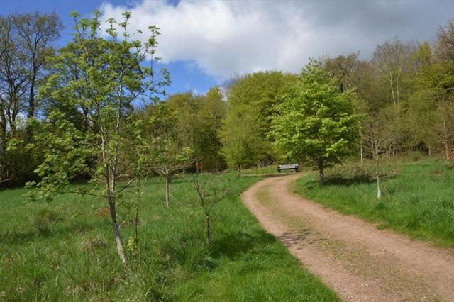 Path through Chesham Bois Burial Ground