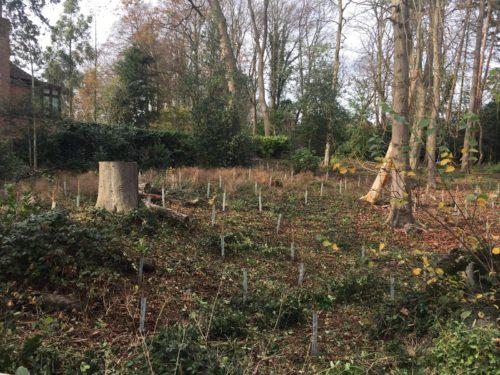 Tree planting at Tenterden Spinney