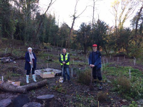Chesham Bois Councillors planting saplings in Bois Wood